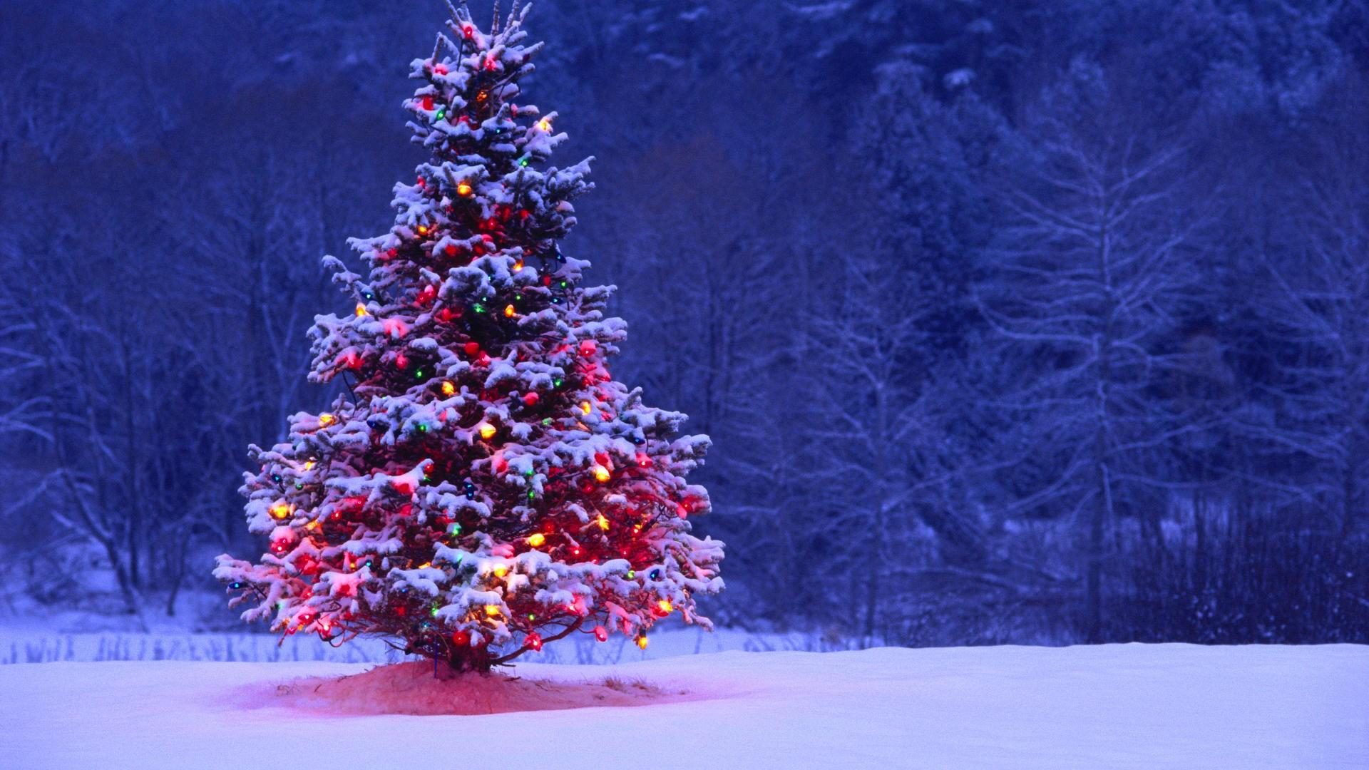 'Ho Ho Ho' Merry Christmas